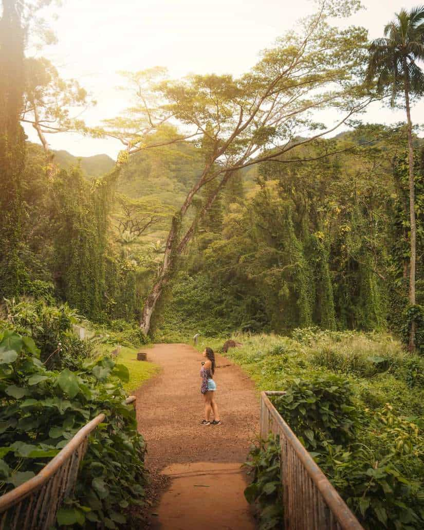 best oahu photo spots | manoa falls