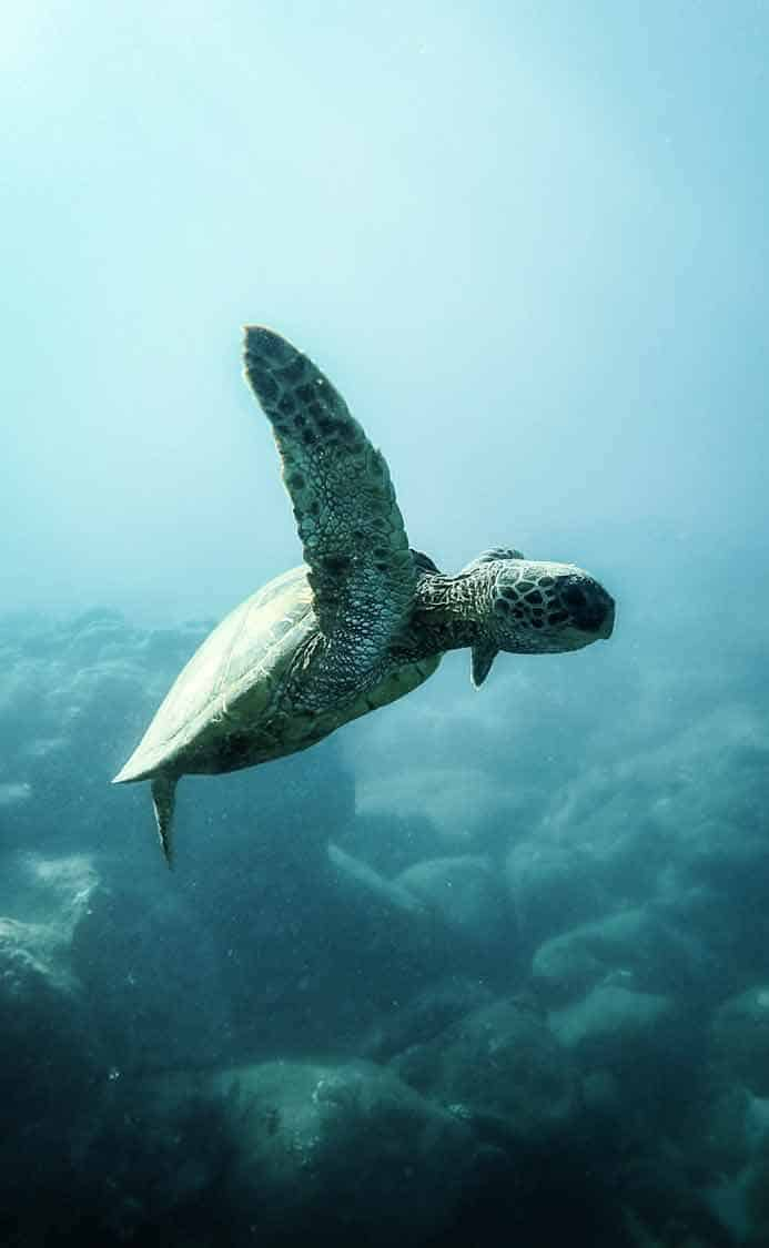 best oahu photo spots | turtle