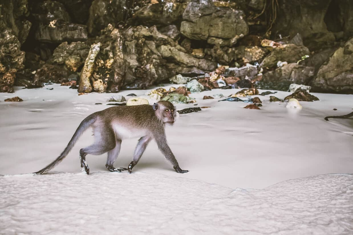 monkey beach | things to do in phi phi island