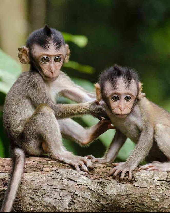 ubud monkey forest 2